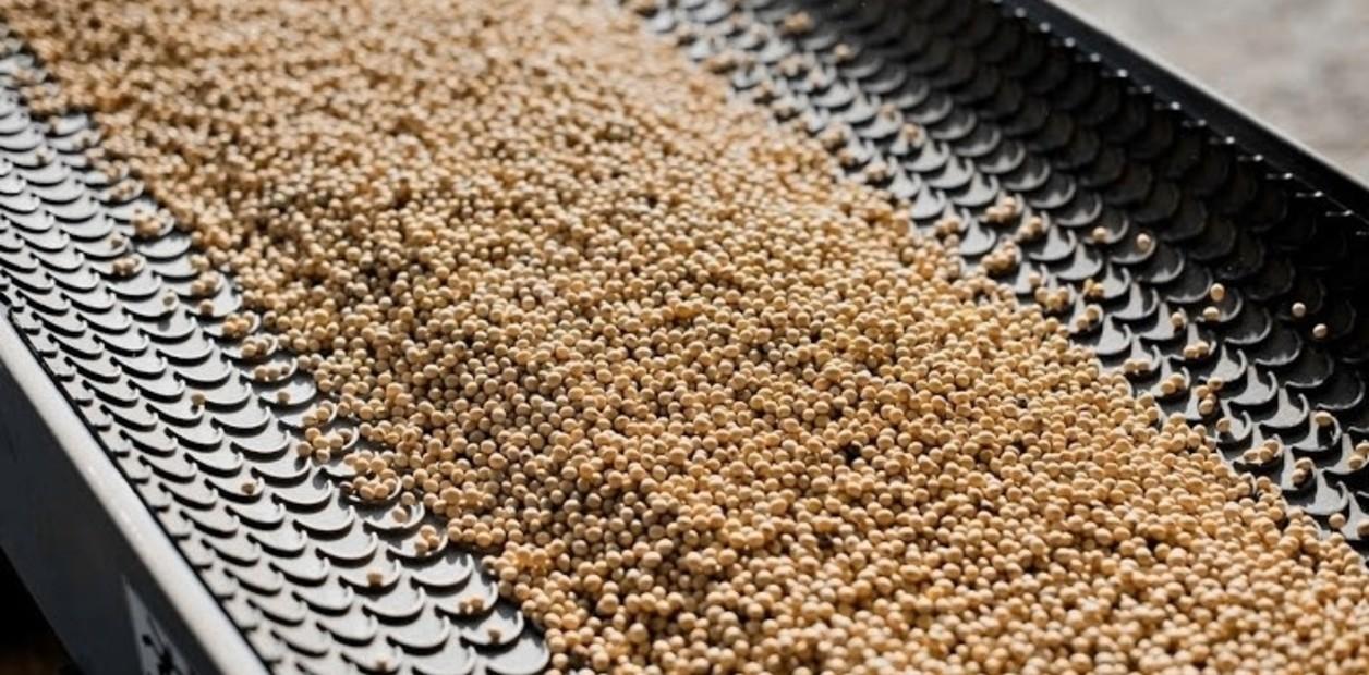 La importación temporaria de soja queda exenta de la tasa de estadística