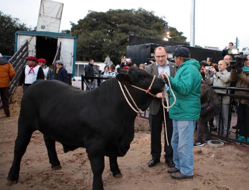 Apolo, un brangus de Chivilcoy, el primer animal que ingreso a Palermo 2019