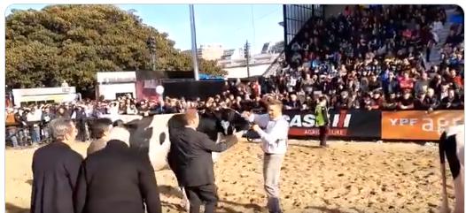 En Holando, se impuso en Palermo el macho de Barberis/Cavallero y una hembra de CAB/La Lilia