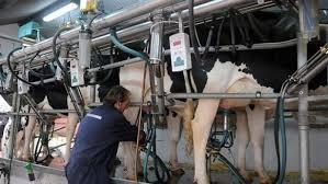 En junio, continuó la caída en las ventas de lácteos en las góndolas y en la exportación
