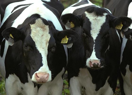 Transformar leche en dólares a través de un proyecto en Villa María
