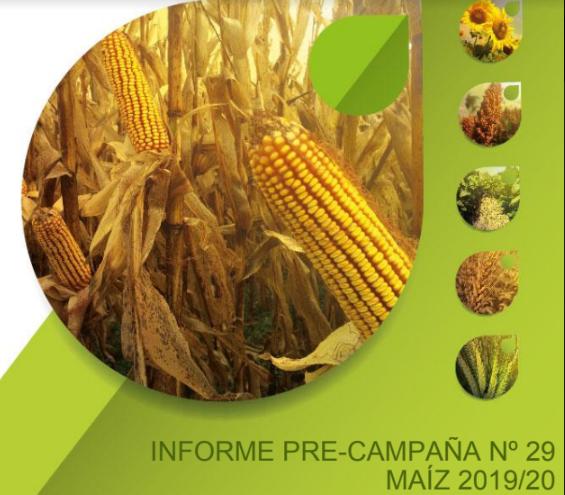 Por incertidumbre inversora, la siembra de maíz no crecerá lo esperado por las Primarias y la devaluación