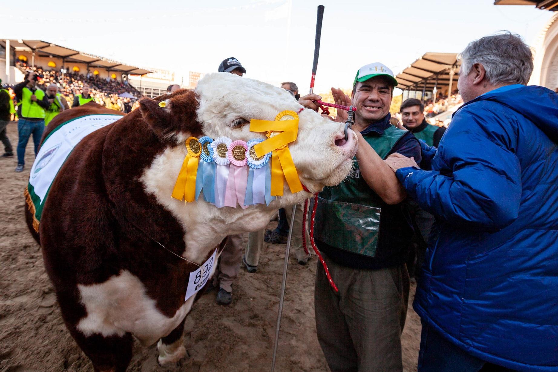 El mejor toro Hereford para Los Murmullos en Palermo 2019