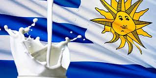 Uruguay: la facturación de tambos cayó 20% en dólares en el primer semestre