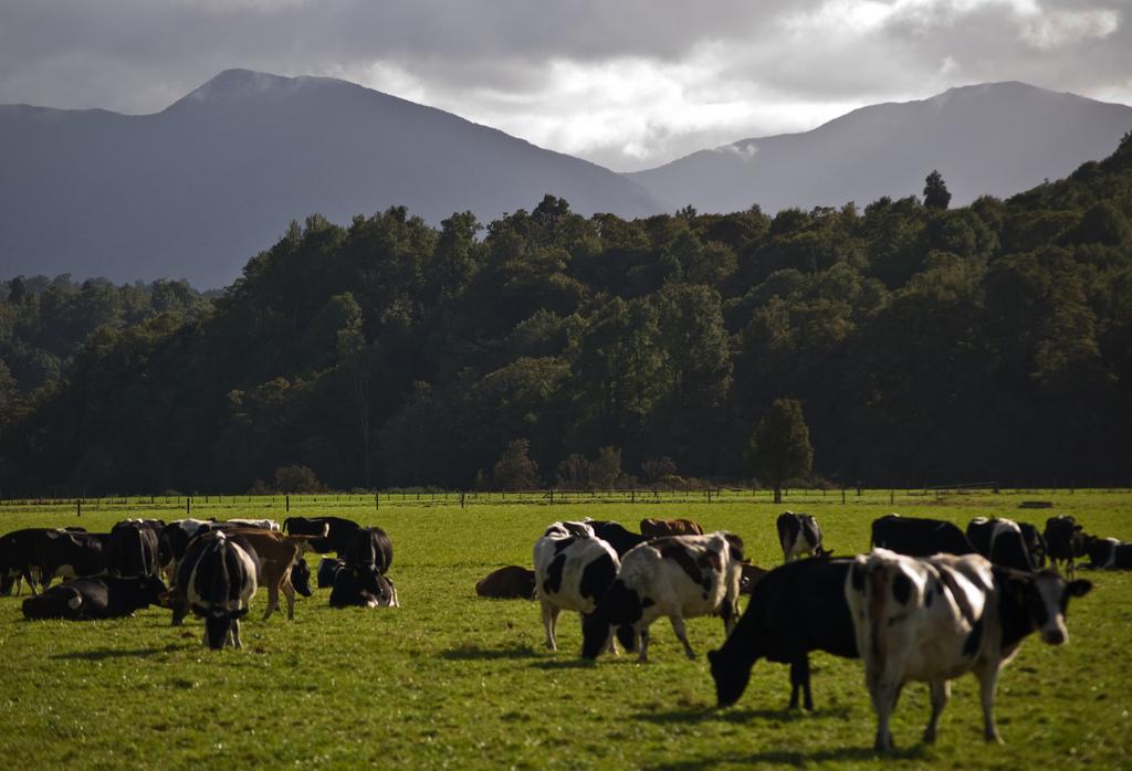 ¿Se mantendrá la estabilidad en el mercado lácteo mundial?