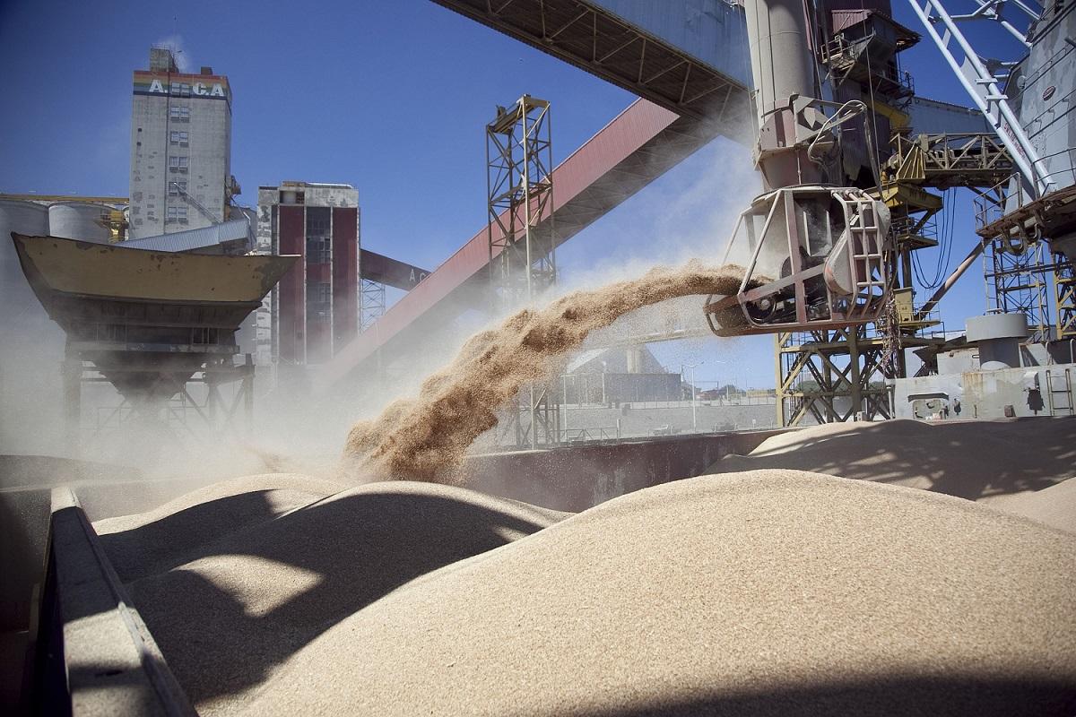 La soja de primera se levanta primero que el maíz, según indicó la Bolsa rosarina