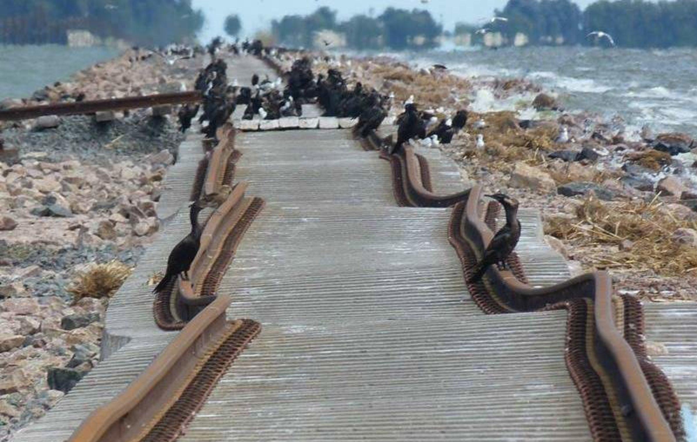Lanzan licitación para obras ferroviarias de La Picasa en tramo Laboulaye – Junín