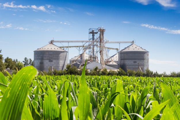 Bolsa de Rosario recorta a 50 M/tn la siembra y producción de maíz