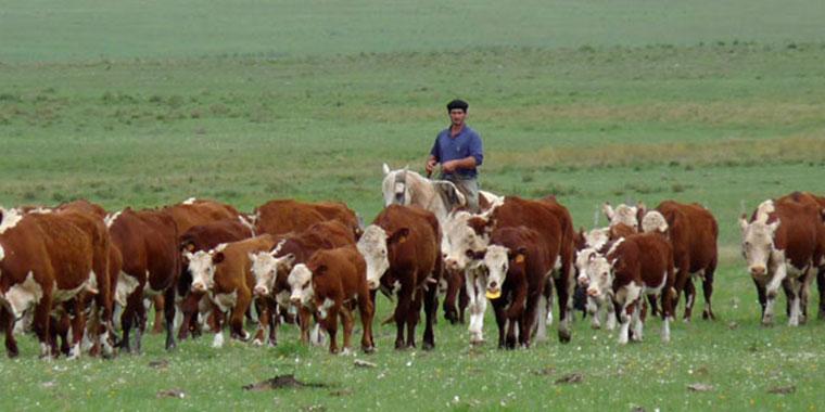 El rodeo bovino ronda los 54,4 M de cabezas, según Agricultura