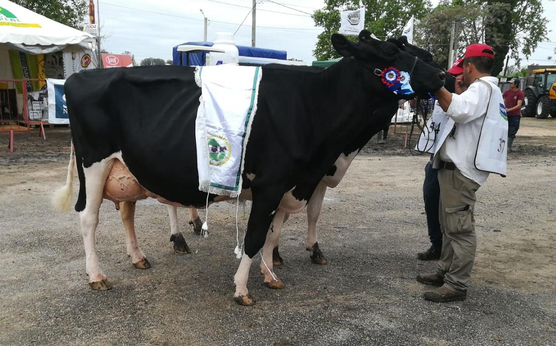 En San José 2019, la Gran Campeona Hembra fue para Antognazza