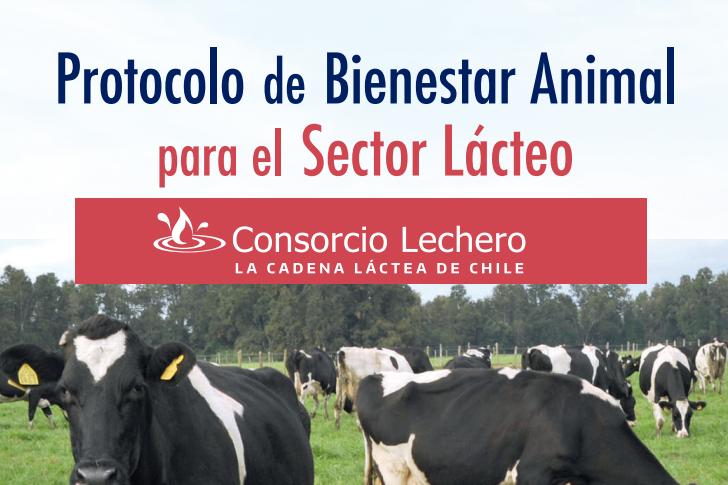 Nuevo Protocolo de Bienestar Animal: propone elevar prácticas para sector lácteo chileno