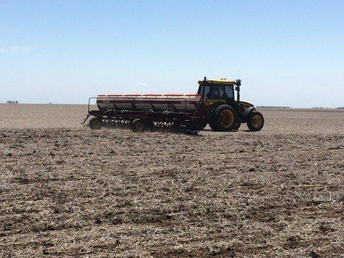 El maíz perdería protagonismo en superficie frente a la soja
