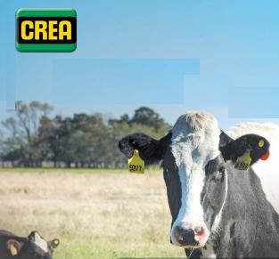 Productores CREA: un 72% están peor económicamente que hace un año