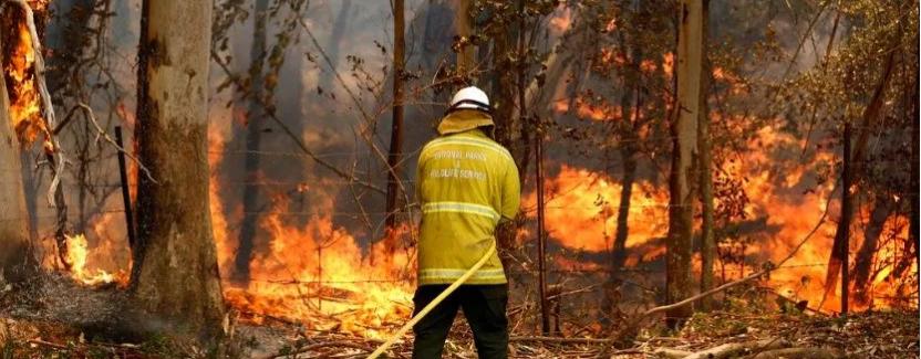 Incendios afecta áreas lecheras en Australia: impacta en precios de carne, verduras y leche