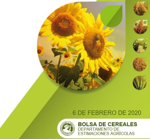La siembra de maíz casi concluye en las previstas 6,3 M/ha para la ciclo '19-2020