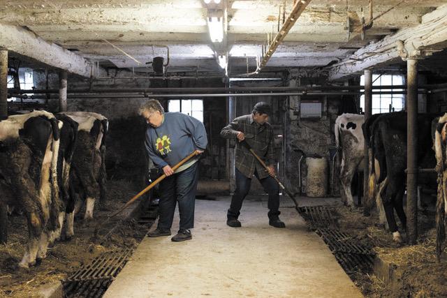 Productividad en Estados Unidos: más leche con las mismas vacas