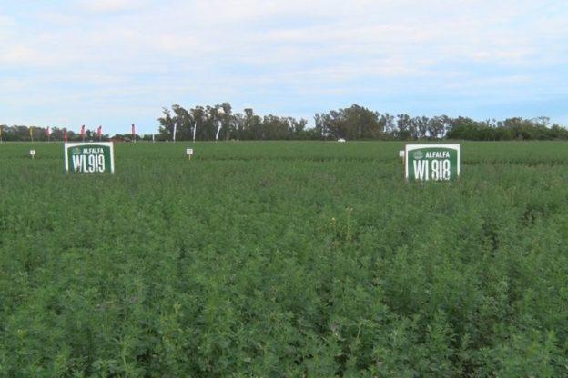 Novedades tecnológicas para la campaña de siembra de alfalfa