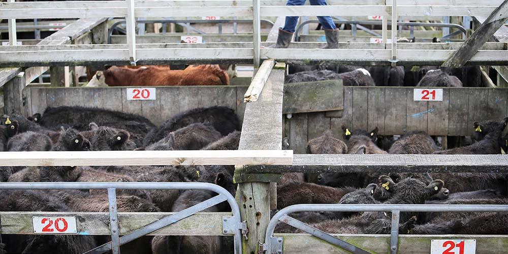 La demanda de carne rebotará: China sigue con importación de alimentos