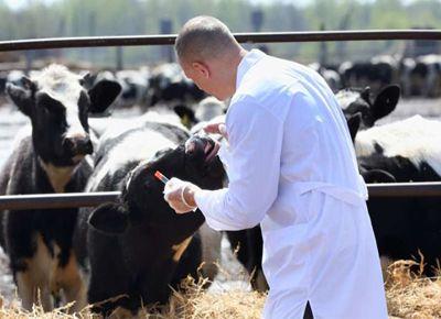 Recomendaciones de veterinarios bonaerenses ante la pandemia