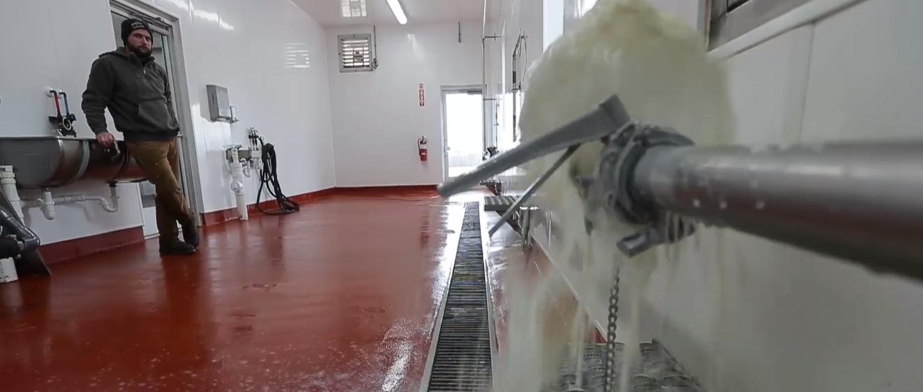 En Wisconsin, tamberos estadounidenses tiran su leche por falta de precio y mercado
