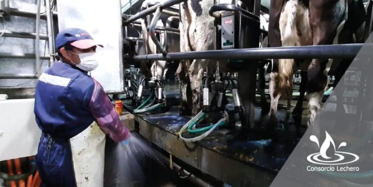 En Chile, el 80% de la leche fue recibida por Colun, Soprele-Prolesur, Nestlé y Watt's
