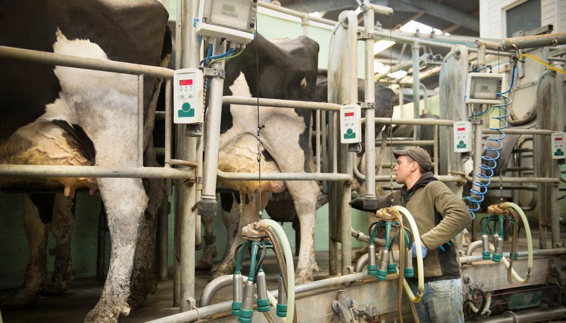 La leche en polvo entera cayó a u$s 2.677 en remate Fonterra al promediar mayo '20