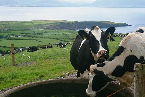 En Irlanda, los tambos le pedirán a sus cooperativas no cargar con todo el peso de las pérdidas