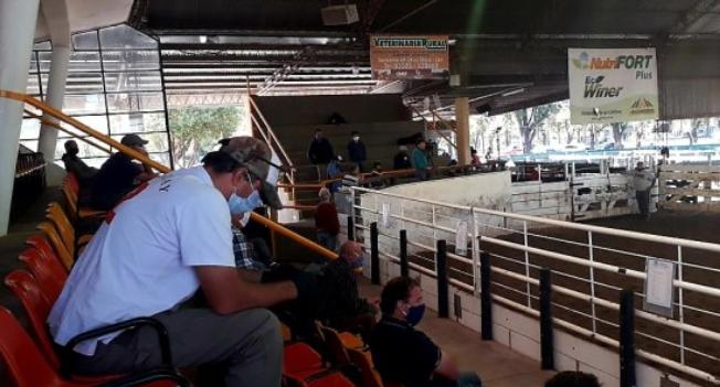 En Jesús María, remataron 1.500 bovinos con medidas de seguridad sanitaria