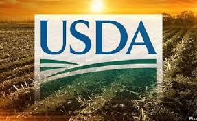 Estados Unidos redujo a 374 millones de toneladas para el maíz en ciclo 2021-22