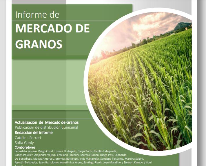 Avanza la cosecha de maíz: el rinde alcanza los 8.740 kilos por hectárea
