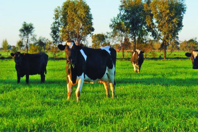 Fertilización nitrogenada: inversiones de alto impacto