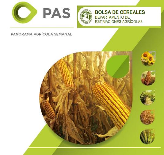 La campaña de maíz se proyecta en 50 M/tn, con 87,8 quintales de rinde promedio