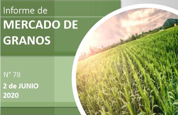 El avance de la cosecha local de maíz presiona a la baja al precio del grano