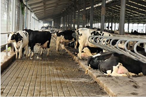 En Chile, cooperativas lácteas refuerzan el contacto virtual con sus productores