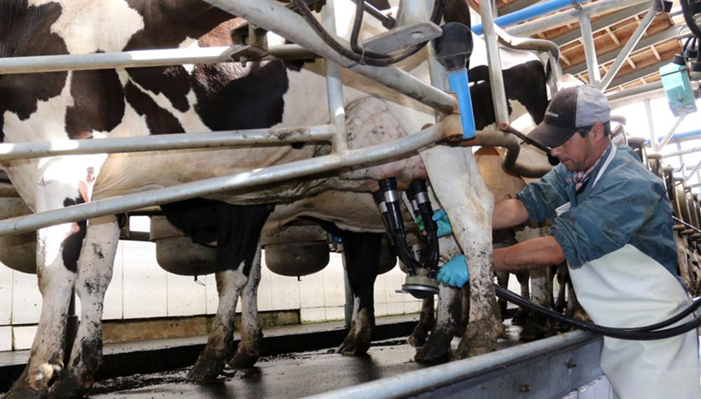 En primavera, la producción de leche podría superar los 11.000 millones de litros