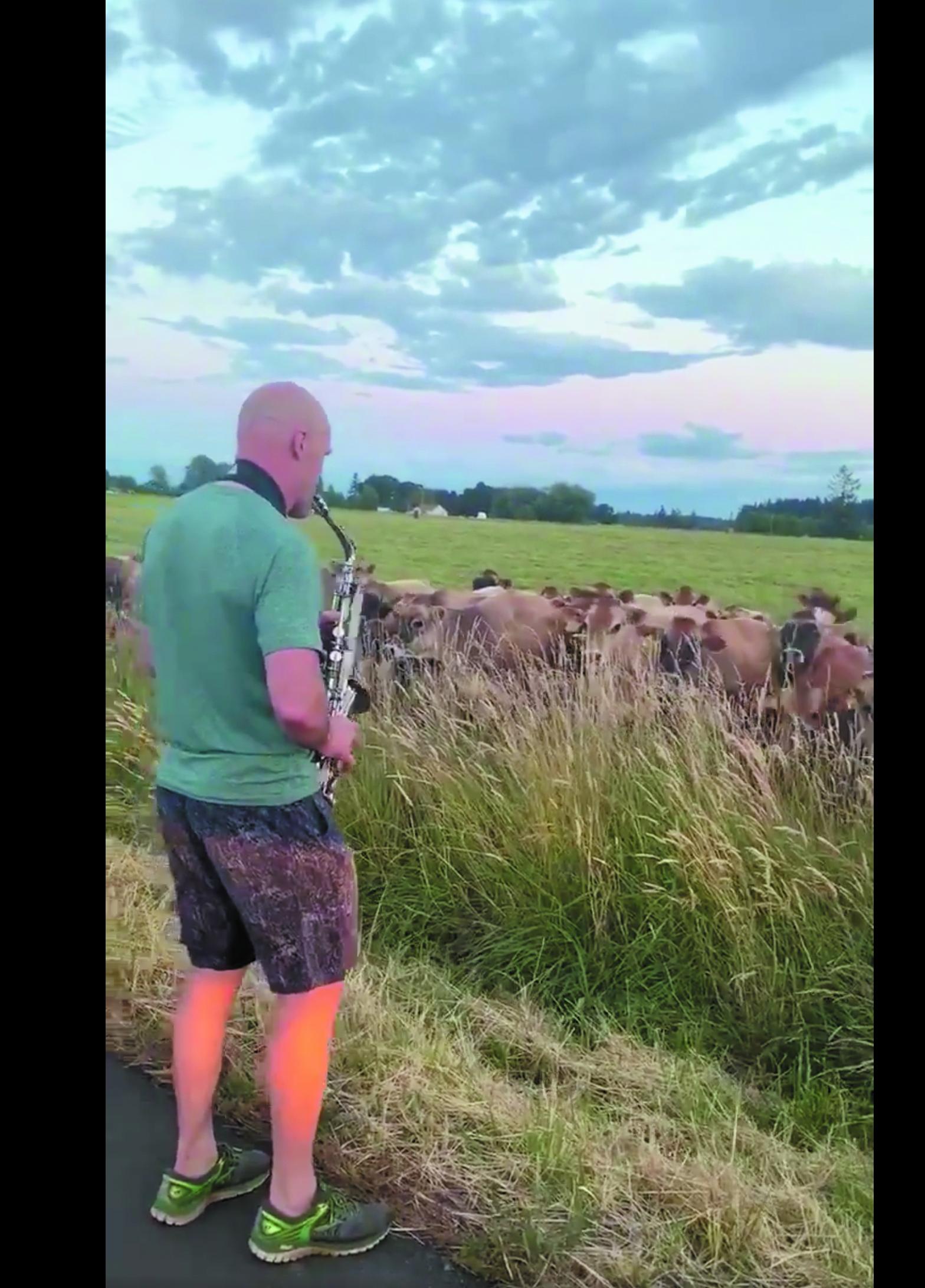 Concierto de saxofón para un rebaño de vacas