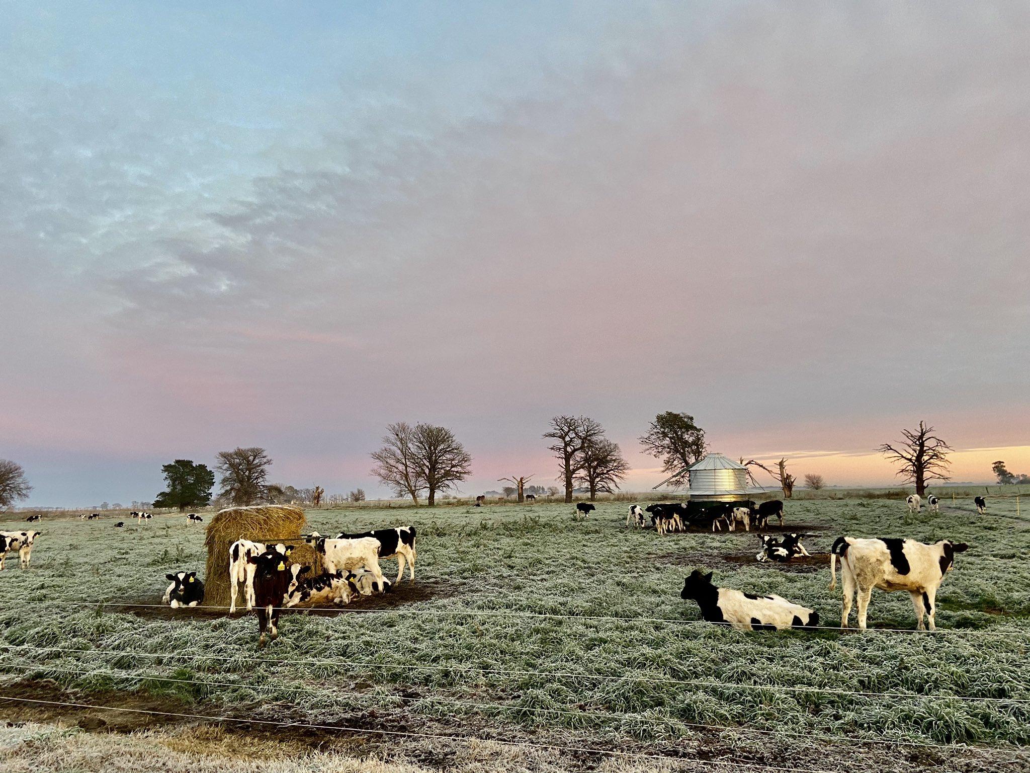 Frío y heladas en la Pampa Húmeda