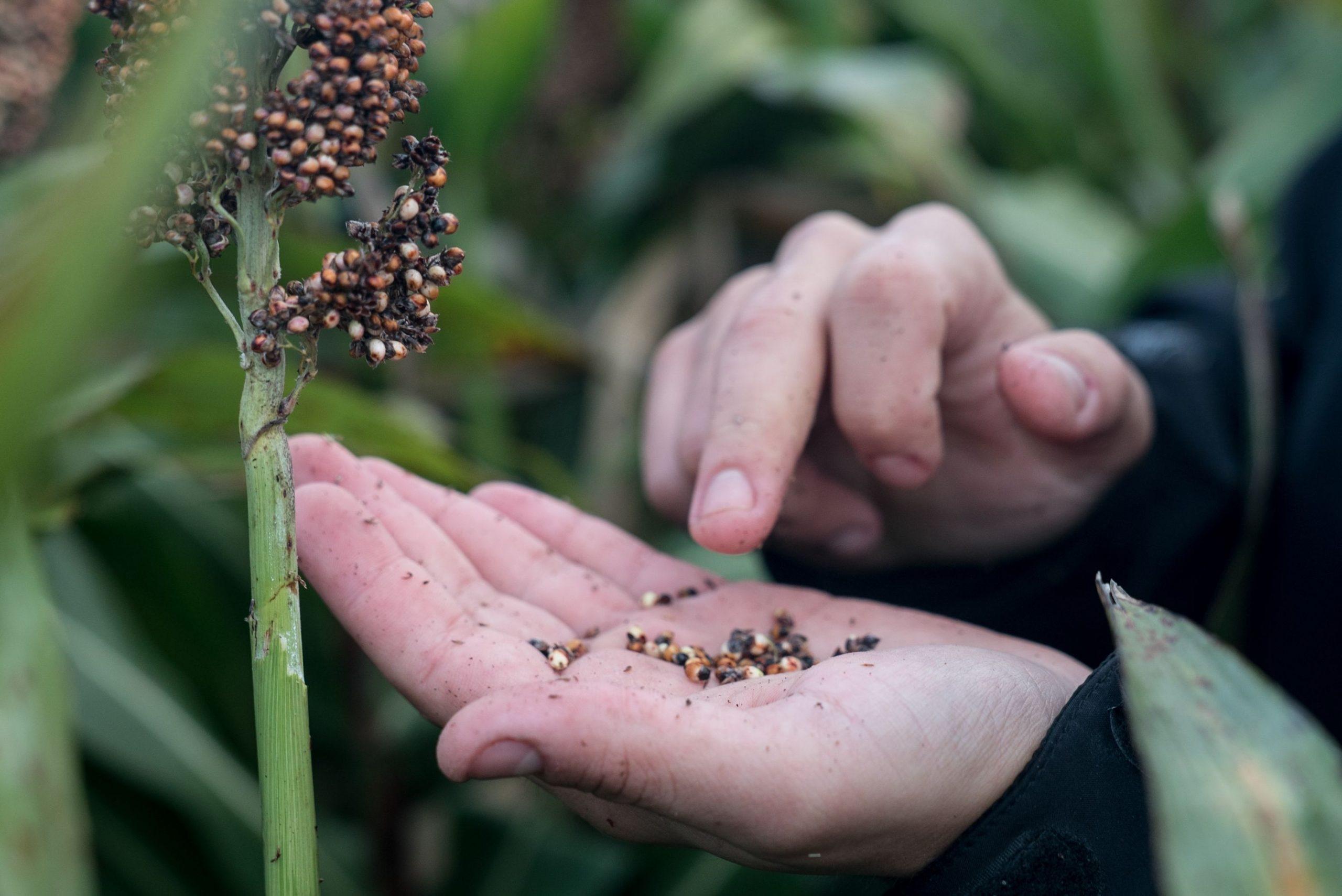 Fortia lanza plataforma: el objetivo es mejorar la rentabilidad agropecuaria
