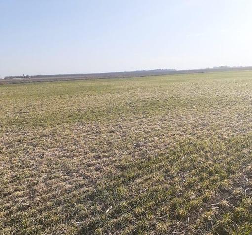 Clima seco, altas temperaturas y sin lluvias en zona pampeana