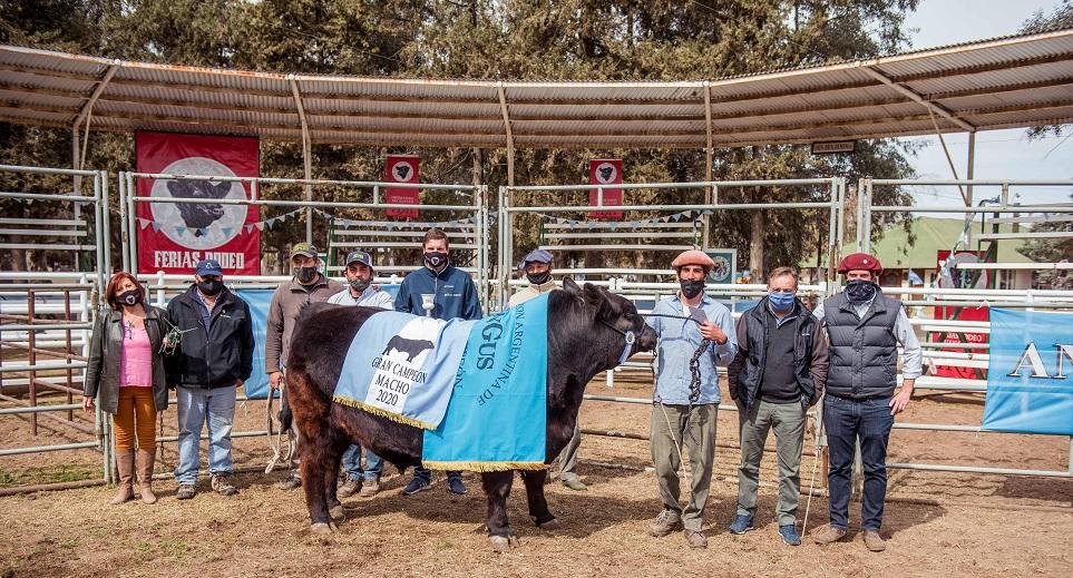 Pagaron $ 840 mil por el Gran Campeón Macho Angus de Expo Huinca Renancó