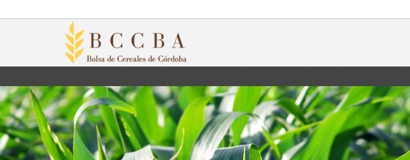 Córdoba generó casi 20 M/tn de maíz en ciclo 2018/20