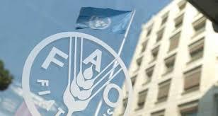 Según la FAO, los precios de la leche crecieron un 1,7% anual a nivel mundial