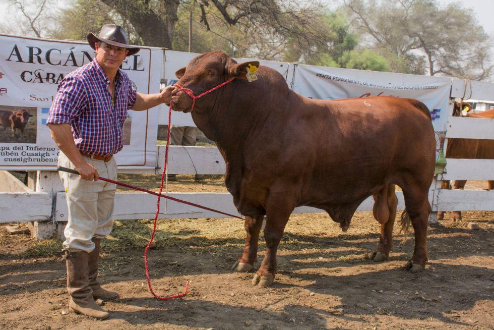En Pampa del Infierno, se subastó toro Brangus en $ 380 mil
