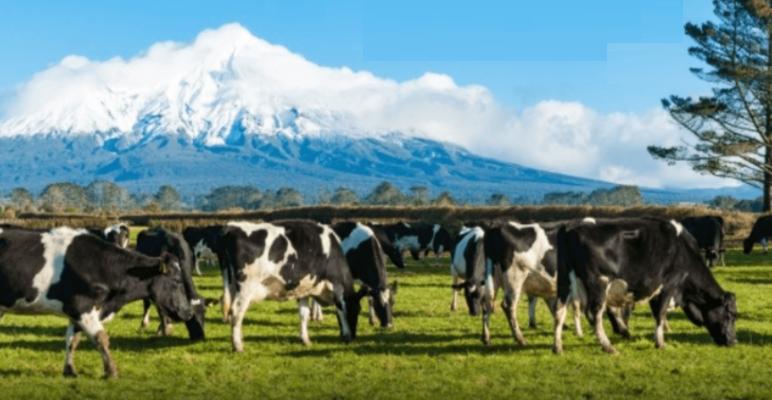 En Nueva Zelanda, ganaderos y tamberos analizan el efecto de emisiones