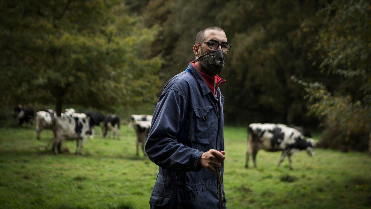 España y los modelos productivos de leche que propone Bruselas