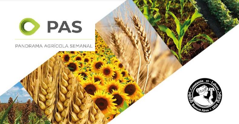 Avanza la siembra de maíz temprano: se cubrió el 32% de 6,3 M/ha a implantar