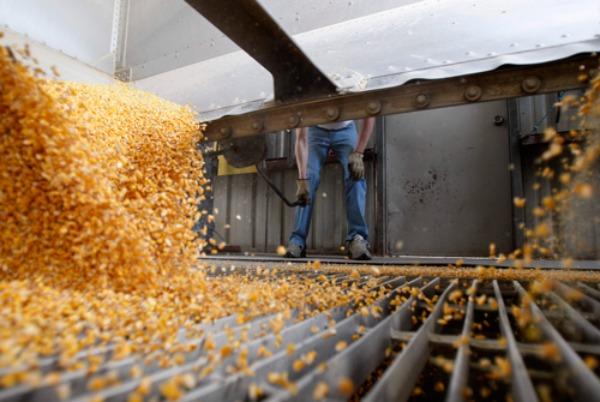 Pese a la entrega de maíz nuevo en Estados Unidos, subió el precio en Chicago