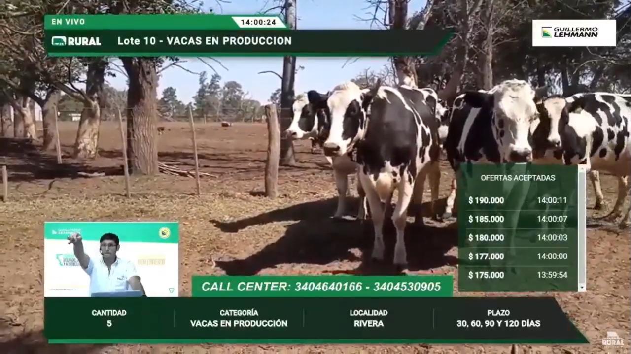 Noveno remate de hacienda lechera de La Lehmann: vacas holando en producción a $ 250 mil