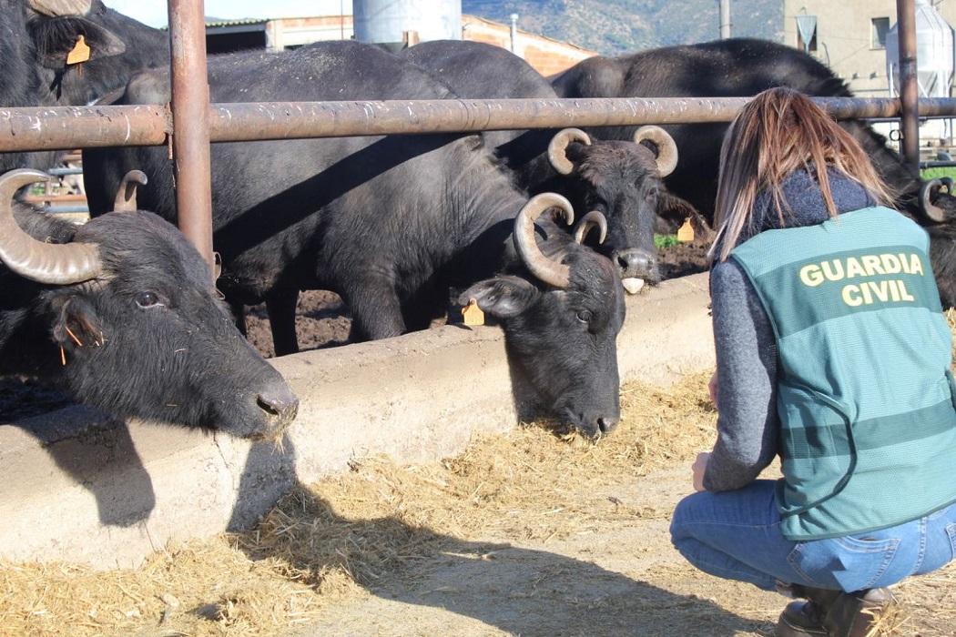 Las autoridades italianas descubren que una mozzarella de búfala de Girona lleva leche de vaca