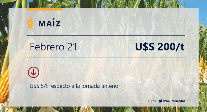 El maíz toca los u$s 200 para febrero próximo